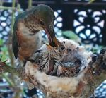 7-8-2012-Mom_Feeding_Kids-1.jpg